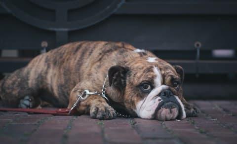 A sad looking dog